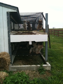 Indiana Amish puppy mill