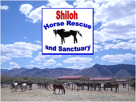 Shiloh logo lg