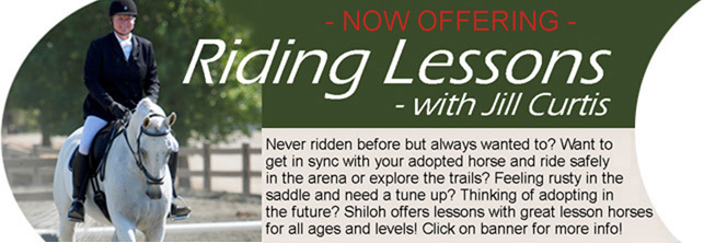 Riding Lessons lg