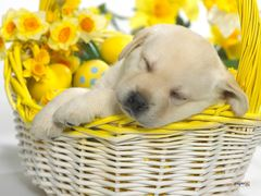 springtime puppy