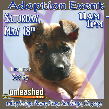 Adopt Lab in Poway Ulnleashed Sat May 18 11-1p