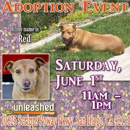 Adopt Lab in Poway Ulnleashed Sat Jun 1 fr 11-1p