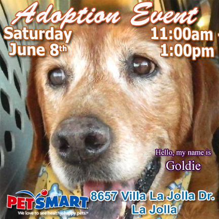 Adopt Lab in LaJolla at Petsmart on Sat Jun8 11-1