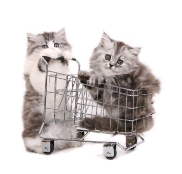 shopping kittens