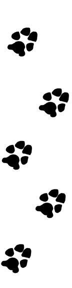 Paw Print (Up & Down) Ruler