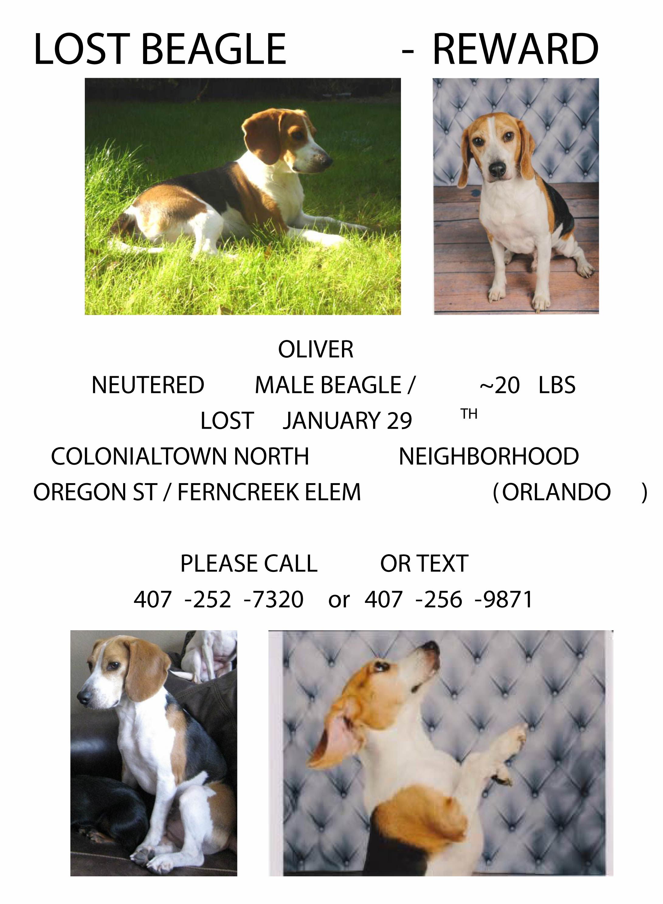 Lost Beagle Flyer