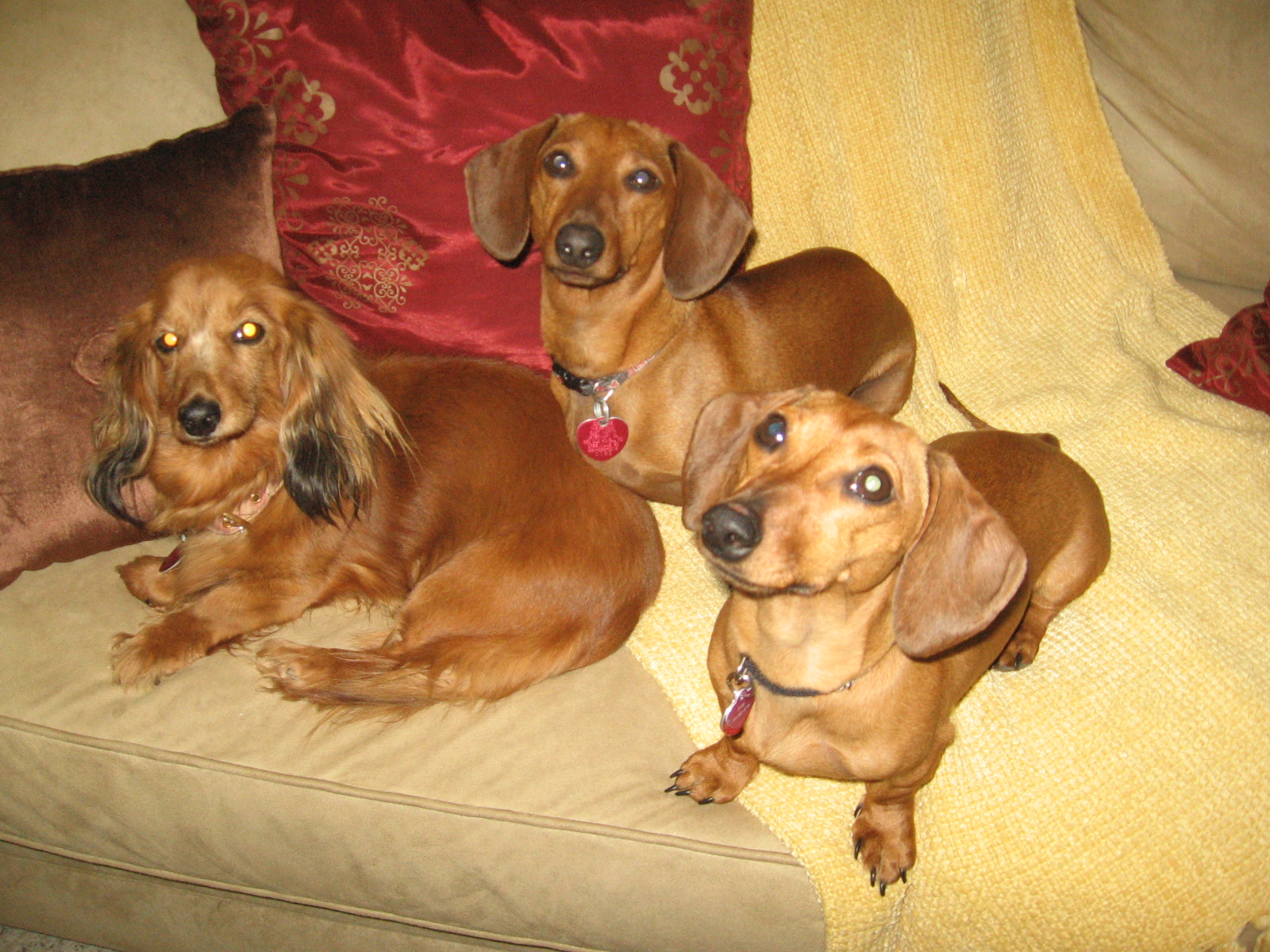 3 red doxies