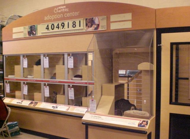 PetSmart Cat Adoption Center 2011