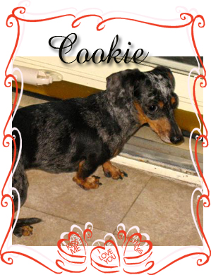 cookie senior 2013