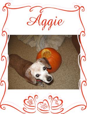 aggie senior 2013