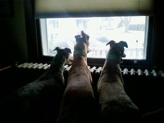 Barnett Dogs Watching for Mom