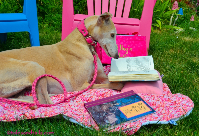 Greyhound Reading1