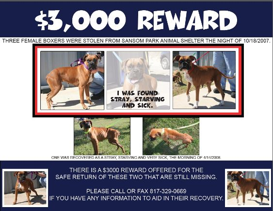 lost-legacyboxerrescue