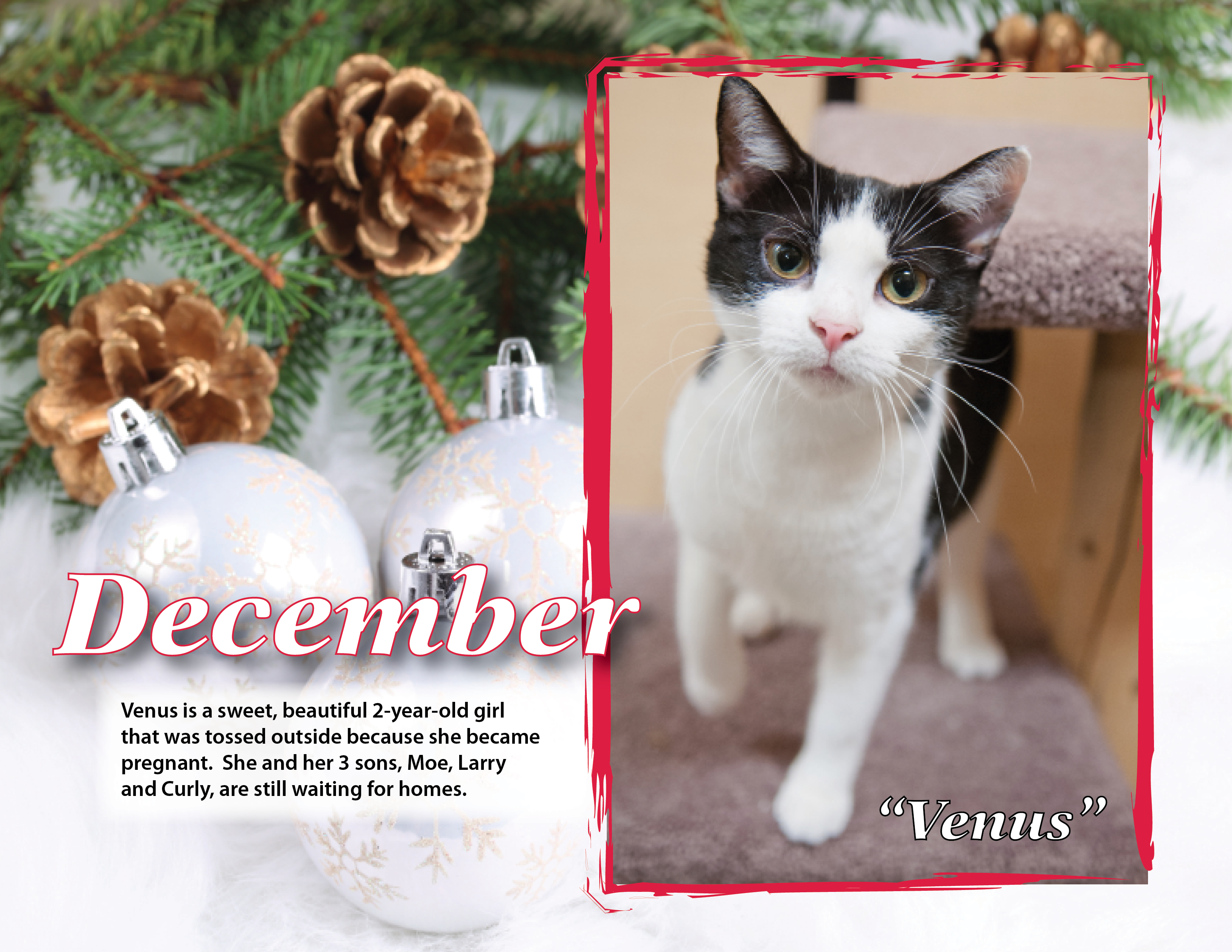 Calendar 2013 Dec