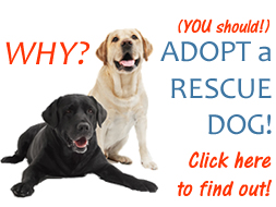 Why should you adopt a dog from a pet rescue?